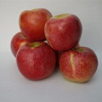 A pile of apples for a mono meal